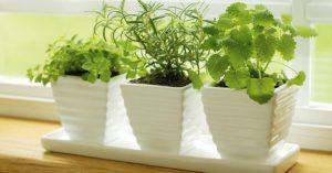 ideas-para-decorar-jardines-pequenos-2