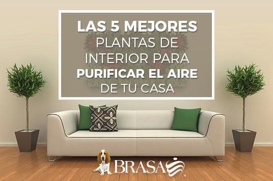 Brasa plantas que purifican el aire de tu casa Plantas limpiadoras de aire